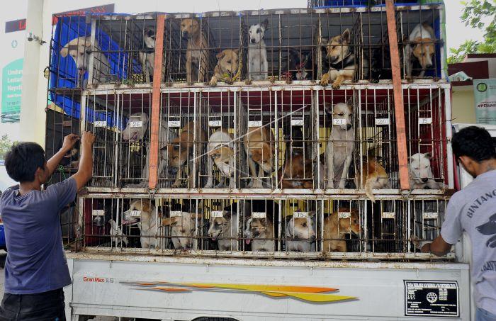 48+ Anjing hutan sumatera terbaru