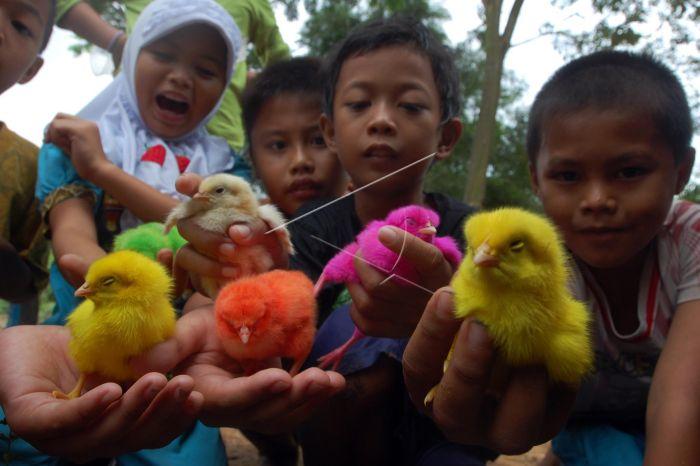 Hasil gambar untuk anak ayam main