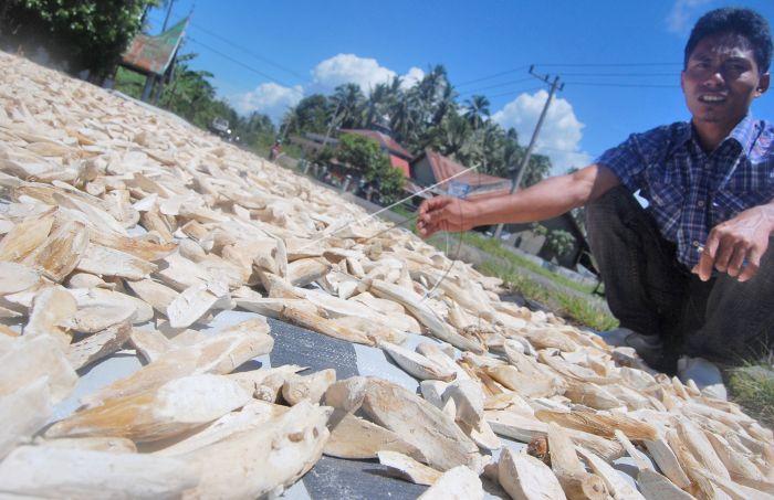 Bahan Tepung Gaplek | ANTARA Foto