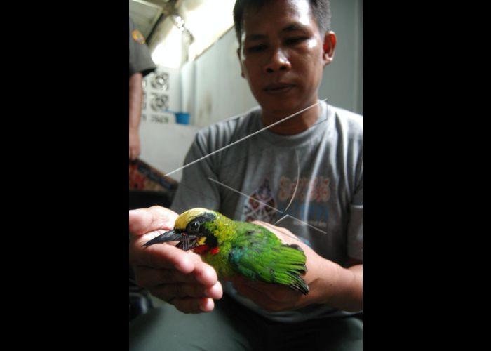 Unduh 820+  Gambar Burung Raja HD Terbaik Gratis
