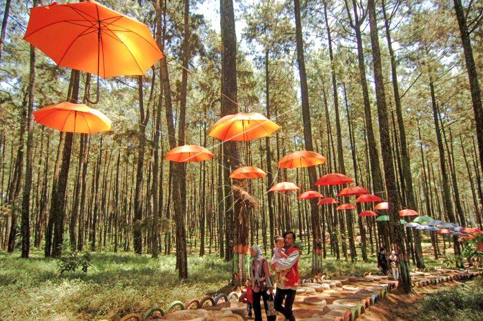 Destinasi Wisata Baru Hutan Pinus Antara Foto