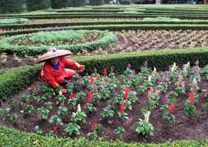 22 9 taman bunga seorang pekerja merawat bunga di kawasan taman bunga