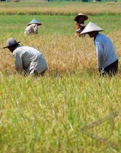 target surplus beras