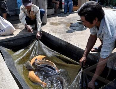 ikan konsumsi lebaran