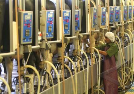pabrik pengolahan susu