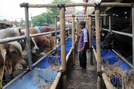 harga sapi naik