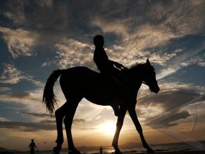 melatih kuda pacuan
