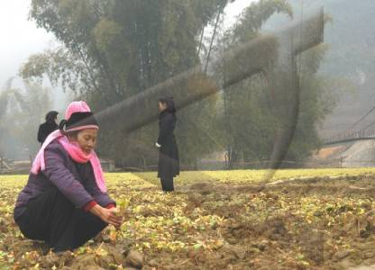 cao bang province damaged by cold weather