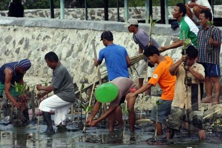 nelayan tanam mangrove