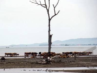 krisis lahan gembala