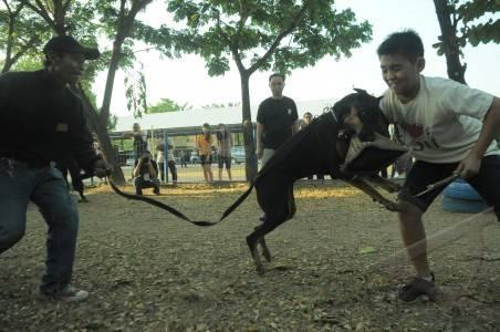 anjing pelacak densus k-9