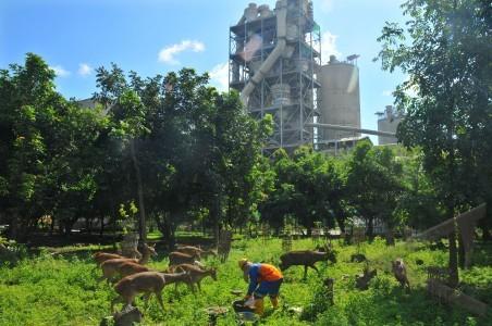 bioindikator pabrik semen