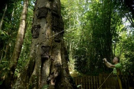 kuburan pohon untuk bayi toraja