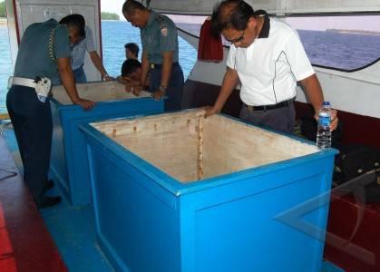 laut mindanao wilayah timur filiphina kanan menikmati taman laut