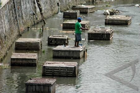 Pemanfaatan sungai seorang warga memancing di atas keramba di sungai