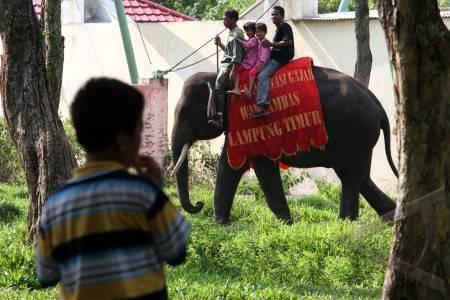 wisata gajah way kambas
