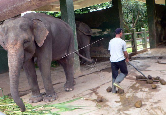 Gajah Antara Foto
