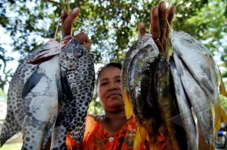 donggala 6 3 ikan pancingan sauna 42 menunjukkan ikan l