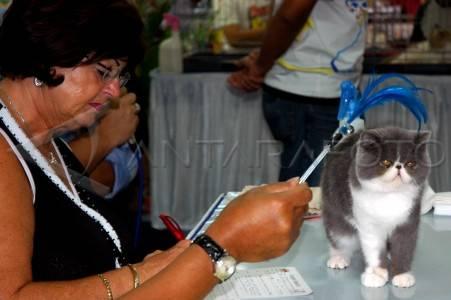 Kontes Kucing - ANTARA Foto: Peristiwa - 10/10/2009 20: