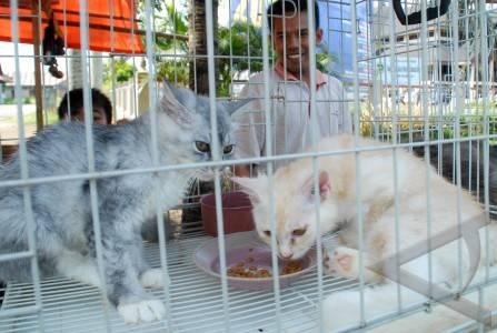 ... kucing anggora yang diperjualbelikan dengan harga r