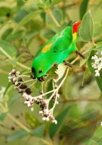 Foto Habitat Burung Serindit ANTARA Foto Peristiwa 29 4