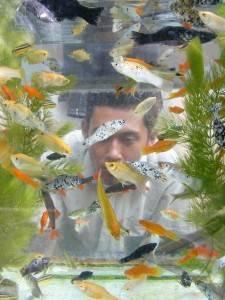 Ikan Hias - ANTARA Foto: Spektrum - 28/11/2010 12:30:27