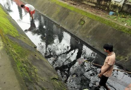 Ikan Cupang Liar - ANTARA Foto: Spektrum - 10/4/2011 15