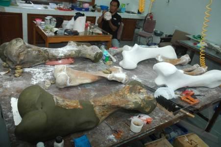bandung 13 4 restorasi fosil sejumlah fosil binatang pu