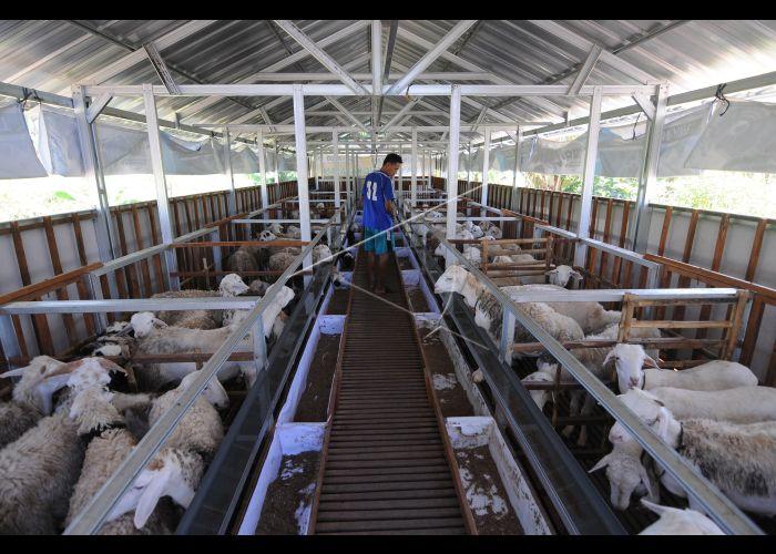 Kandang Modern Peternakan Kambing | ANTARA Foto
