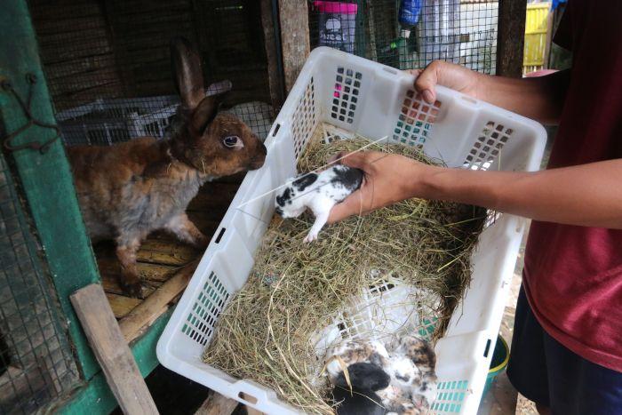 72 Gambar Hewan Kelinci Sumatera Gratis