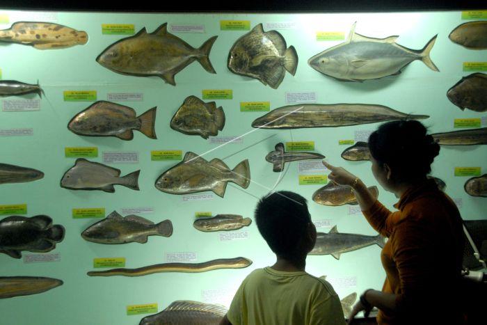 Museum Zoologi Bogor Antara Foto