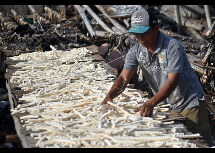 Pengolahan Limbah Tulang Ikan   ANTARA Foto