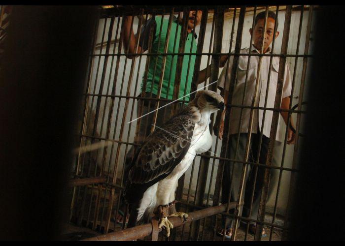 Penyitaan Burung Dilindungi Antara Foto