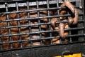 penyelamatan orangutan sumatra