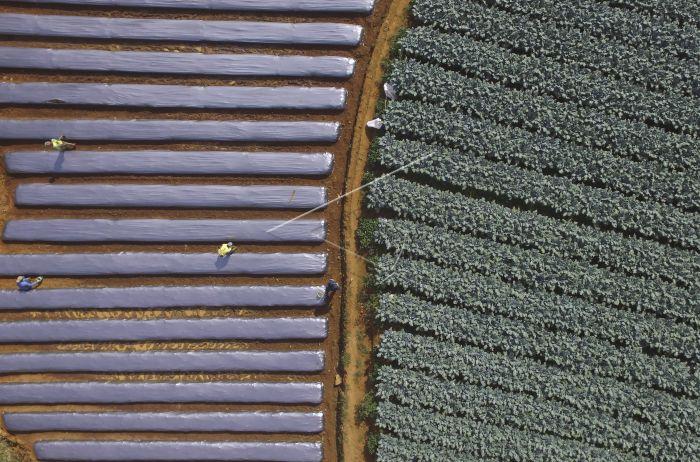 Tantangan Pertanian Indonesia Antara Foto