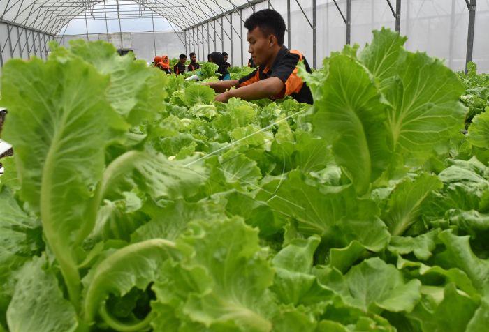 Ujian Praktik Kelulusan Smk Pertanian Antara Foto