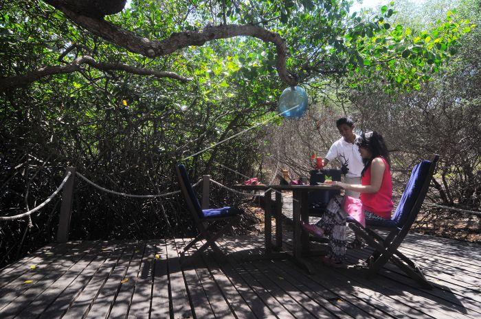 Wisata Hutan Mangrove Tnbb Antara Foto