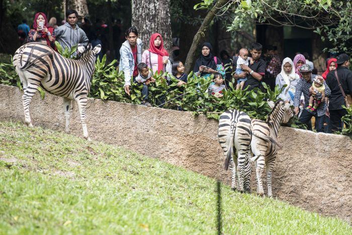 Wisata Kebun Binatang Bandung Antara Foto